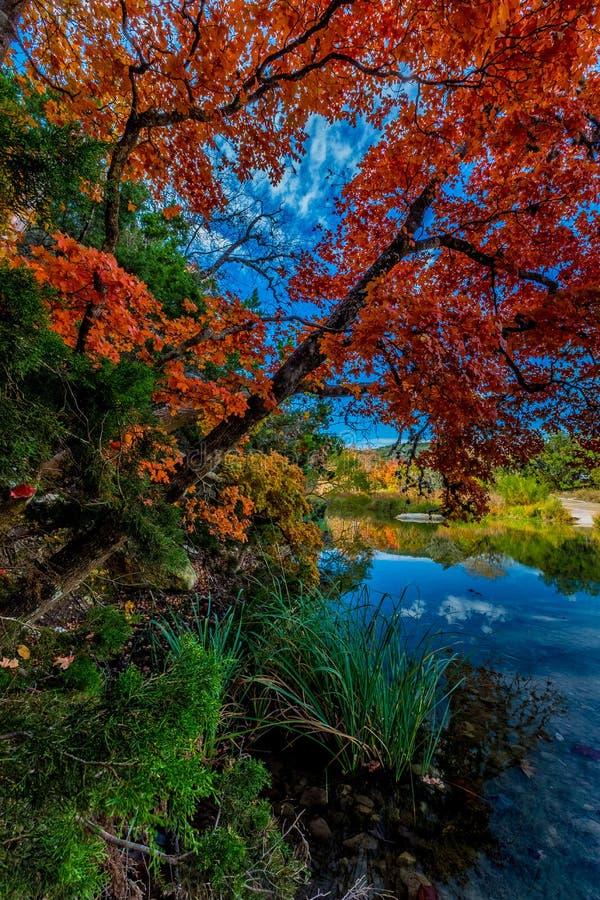 Φωτεινά κόκκινα φύλλα του χαμένου κρατικού πάρκου σφενδάμνων, Τέξας στοκ φωτογραφία