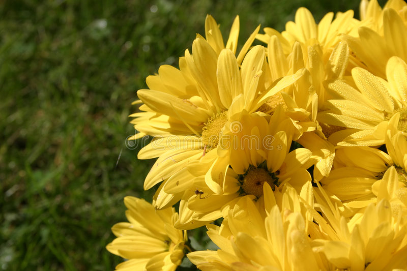 φωτεινά λουλούδια λεπτ& στοκ φωτογραφία με δικαίωμα ελεύθερης χρήσης