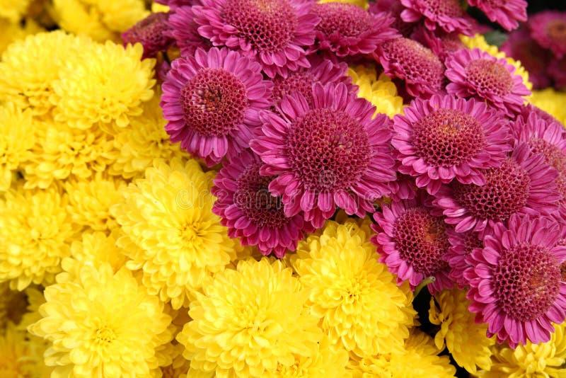 Download φωτεινά λουλούδια χρυσά στοκ εικόνα. εικόνα από ανάπτυξη - 17055565