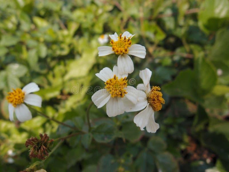 φωτεινά λουλούδια κίτρι&nu στοκ φωτογραφίες με δικαίωμα ελεύθερης χρήσης