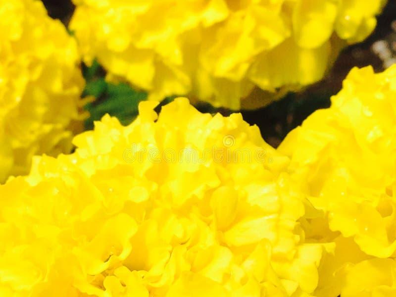 φωτεινά λουλούδια στοκ εικόνα
