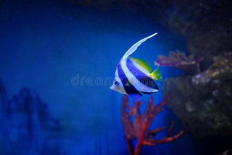 Φωτεινά πολύχρωμα ψάρια μεταξύ των κοραλλιών σε ένα βάθος στοκ φωτογραφία με δικαίωμα ελεύθερης χρήσης