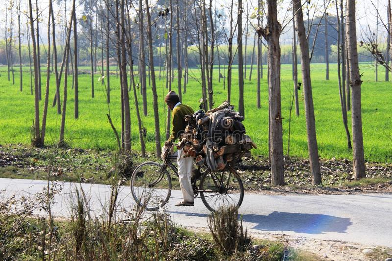 φωτεινά φέρνοντας δάση υλοτόμων ημέρας ηλιόλουστα στοκ εικόνες με δικαίωμα ελεύθερης χρήσης