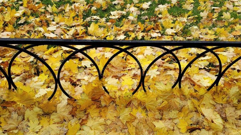 Φωτεινά φύλλα σφενδάμου φθινοπώρου στην πράσινη χλόη με το φράκτη σιδήρου στοκ εικόνες με δικαίωμα ελεύθερης χρήσης