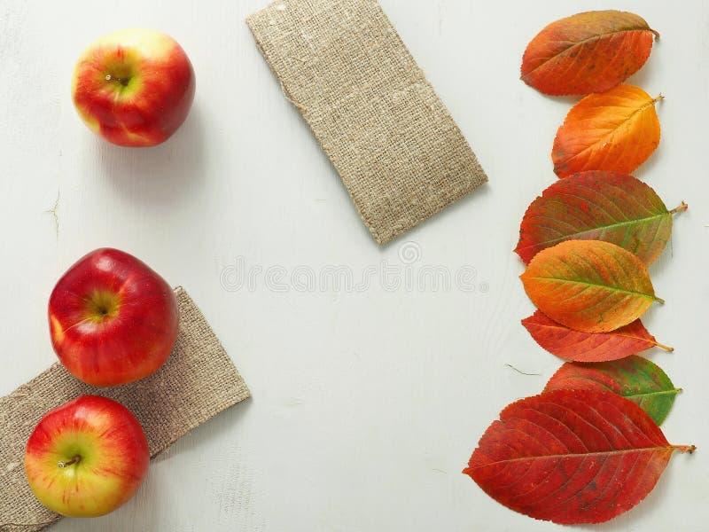 Φωτεινά φύλλα του φθινοπώρου στη δεξιά πλευρά του άσπρου ξύλινου υποβάθρου στοκ φωτογραφίες