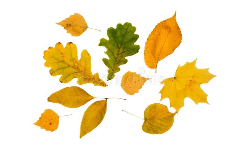 Φωτεινά φύλλα των διαφορετικών δέντρων σε ένα άσπρο υπόβαθρο στοκ φωτογραφία