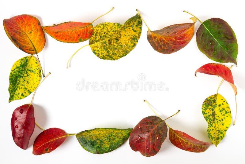 φωτεινά φύλλα φθινοπώρου στοκ φωτογραφία με δικαίωμα ελεύθερης χρήσης