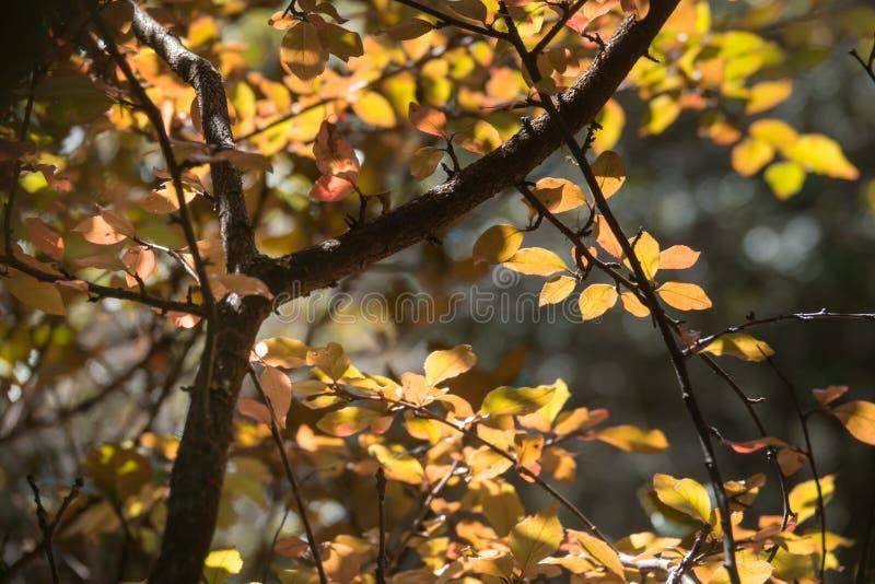Φωτεινά χρωματισμένα φύλλα στους κλάδους στο δάσος φθινοπώρου στοκ εικόνες