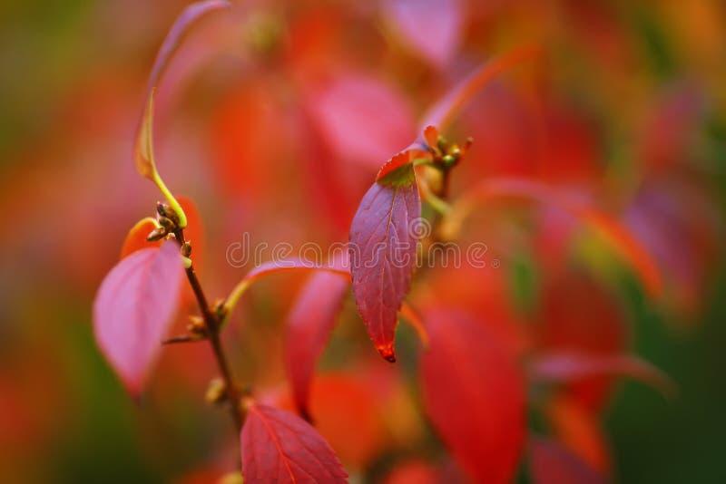 Φωτεινά χρωματισμένα φύλλα στους κλάδους στο δάσος φθινοπώρου στοκ εικόνα