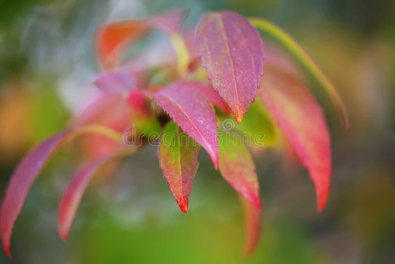 Φωτεινά χρωματισμένα φύλλα στους κλάδους στο δάσος φθινοπώρου στοκ φωτογραφία με δικαίωμα ελεύθερης χρήσης