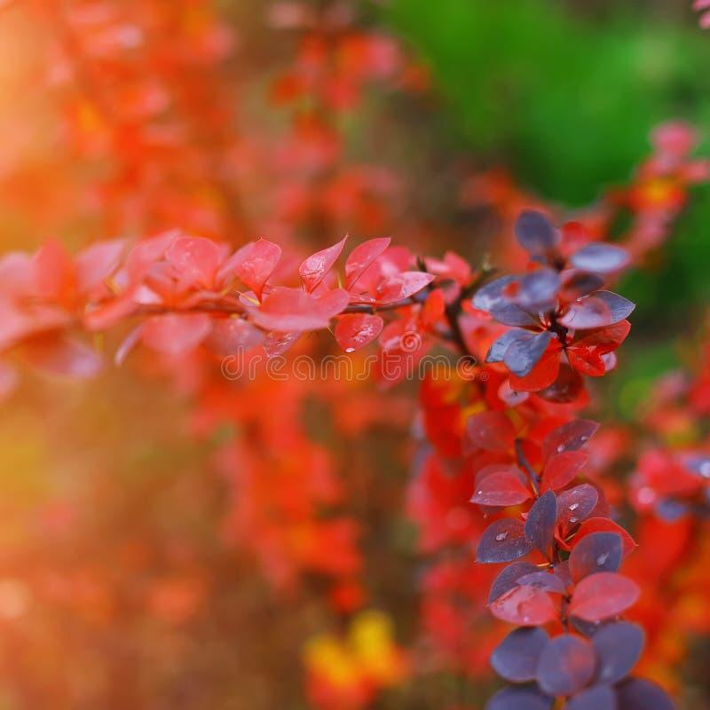 Φωτεινά χρωματισμένα φύλλα στους κλάδους στο δάσος φθινοπώρου στοκ εικόνες με δικαίωμα ελεύθερης χρήσης