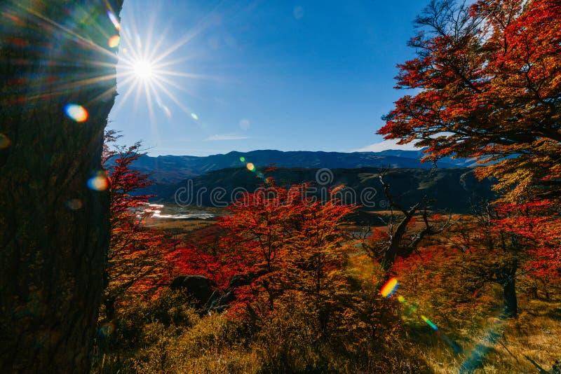 Φωτεινά χρώματα του φθινοπώρου και τοπία του πάρκου Los Glaciares Πτώση στην Παταγωνία, η αργεντινή πλευρά στοκ εικόνες