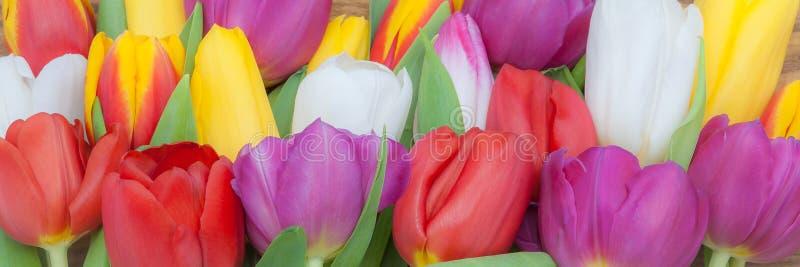 Φωτεινή άνοιξη πολύχρωμη εικόνα αγγαλιάς τουλιπών μεγάλη γενικά στοκ φωτογραφία με δικαίωμα ελεύθερης χρήσης