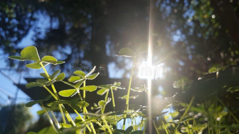 φωτεινή ημέρα τριφυλλιού κινηματογραφήσεων σε πρώτο πλάνο ηλιόλουστη στοκ φωτογραφίες με δικαίωμα ελεύθερης χρήσης