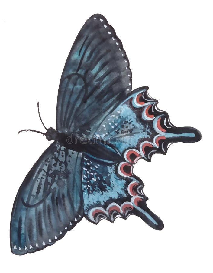 Φωτεινή μπλε πεταλούδα με μια μαύρη περίληψη και μια διαμορφωμένη άκρη απεικόνιση αποθεμάτων