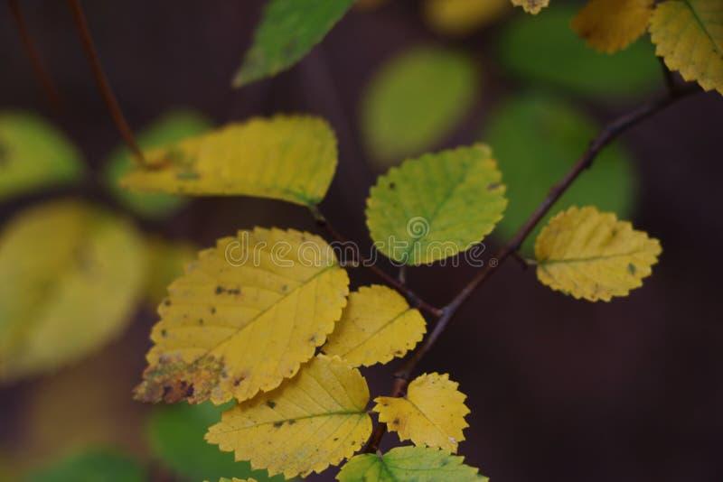 Φωτεινή παλέτα χρώματος στα φύλλα φθινοπώρου στοκ φωτογραφίες με δικαίωμα ελεύθερης χρήσης
