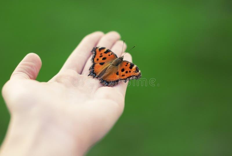 Φωτεινή πορτοκαλιά πεταλούδα στοκ εικόνες με δικαίωμα ελεύθερης χρήσης