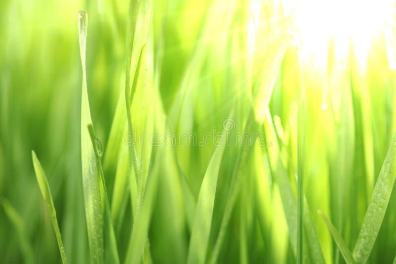 φωτεινή χλόη πράσινη στοκ φωτογραφίες
