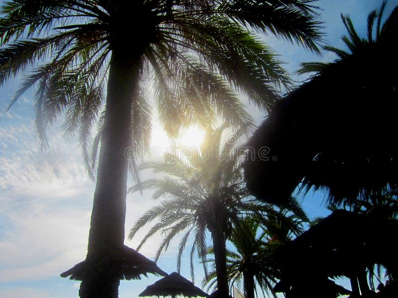 Φωτεινός ήλιος μέσω των φύλλων φοινικών στοκ εικόνες