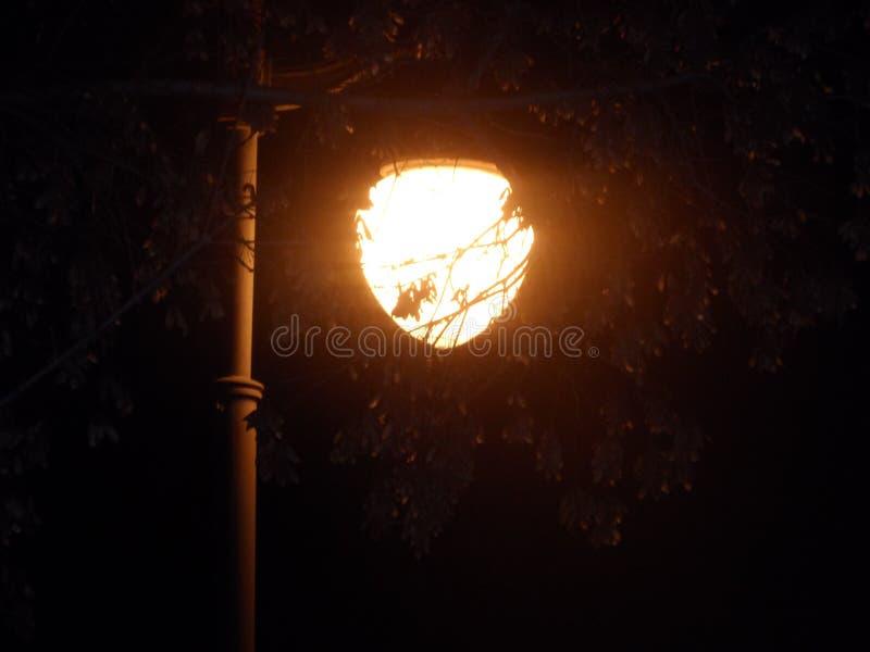 Φωτεινός σηματοδότης, μόνος λαμπτήρας οδών πίσω από έναν κλάδο δέντρων σε ένα θερινό βράδυ σε ένα πάρκο κοντά στον πάγκο στοκ φωτογραφία