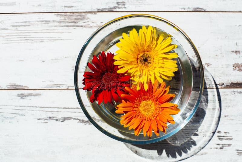 Φωτεινός-χρωματισμένες μαργαρίτες gerbera στο διαφανές κύπελλο με το νερό στοκ φωτογραφία με δικαίωμα ελεύθερης χρήσης