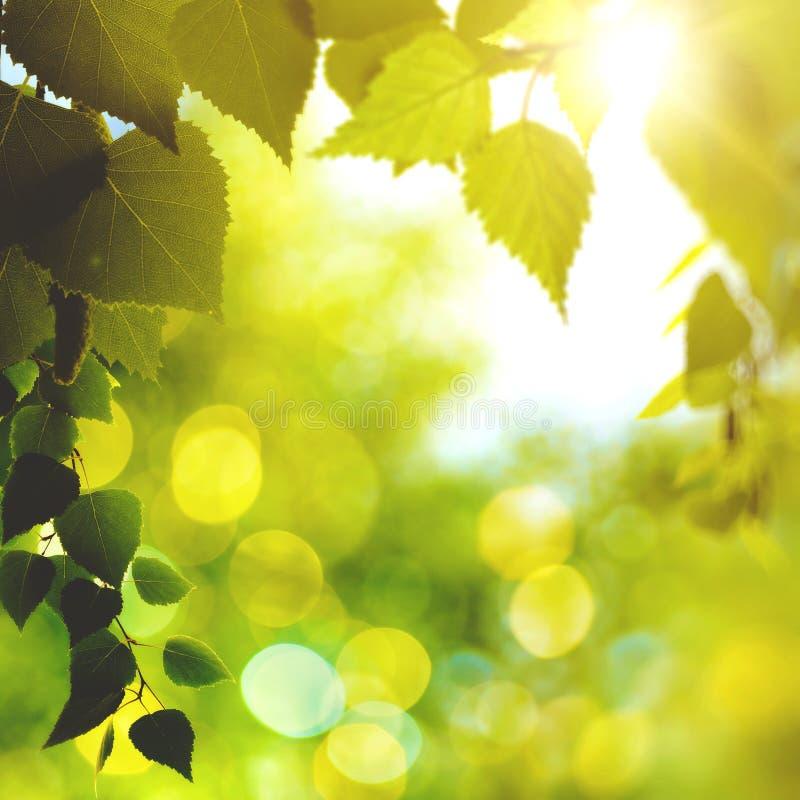 Φωτεινό απόγευμα στο δάσος στοκ εικόνες