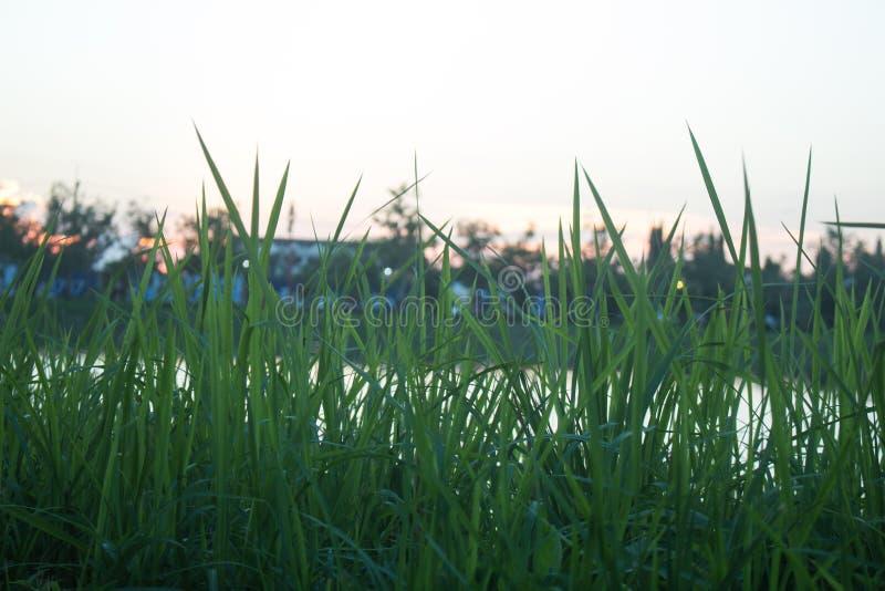 Φωτεινό ηλιοβασίλεμα πέρα από τον πράσινο τομέα χλόης στοκ φωτογραφία με δικαίωμα ελεύθερης χρήσης