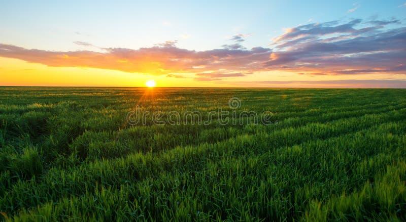 Φωτεινό ηλιοβασίλεμα πέρα από τον τομέα σίτου στοκ φωτογραφία