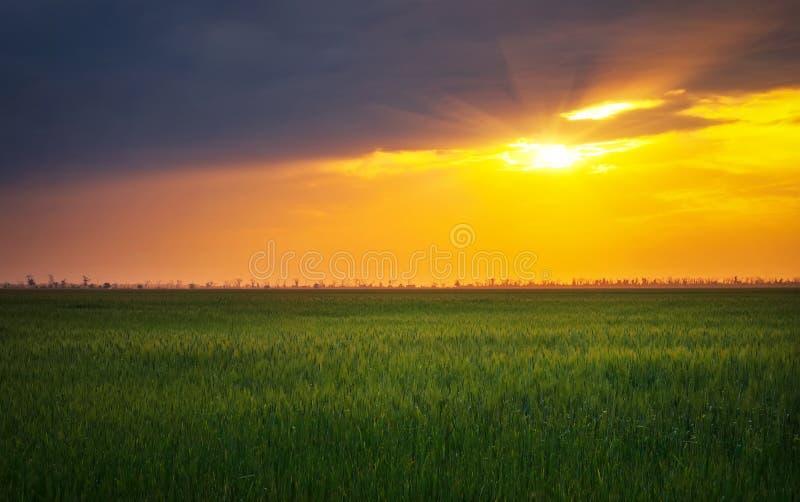 Φωτεινό ηλιοβασίλεμα πέρα από τον τομέα σίτου στοκ εικόνες με δικαίωμα ελεύθερης χρήσης