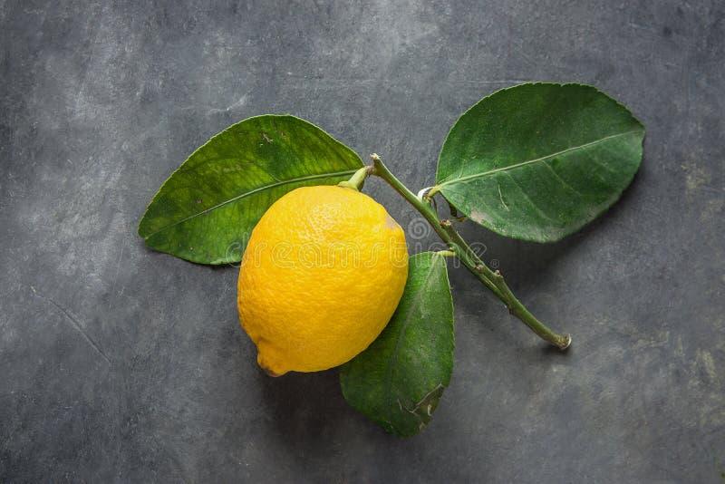 Φωτεινό κίτρινο ώριμο οργανικό λεμόνι στον κλάδο με τα πράσινα φύλλα στο σκοτεινό πέτρινο υπόβαθρο Ορατές ατέλειες δημιουργική ει στοκ εικόνες