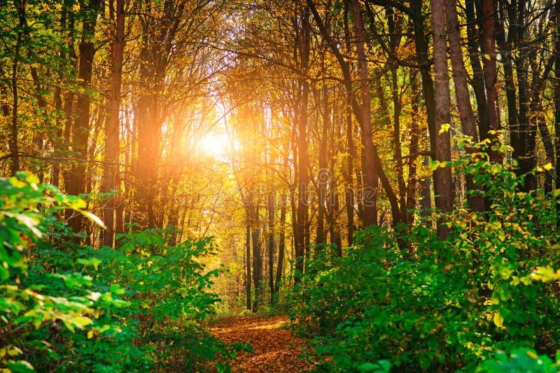 Φωτεινό και ζωηρόχρωμο τοπίο του δασικού ίχνους φθινοπώρου που καλύπτεται με το φύλλο στοκ εικόνες