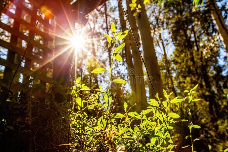 Φωτεινό φως του ήλιου που λάμπει στο νέο πράσινο βλαστό στοκ φωτογραφία με δικαίωμα ελεύθερης χρήσης