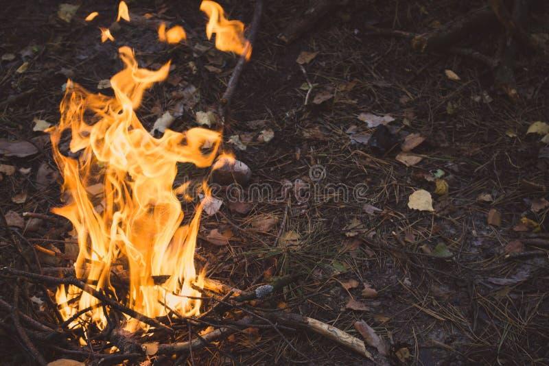 Φωτιά στο δάσος Campfire με φωτεινή φλόγα και ξύλινους κορμούς Φόντο πυρκαγιάς στοκ εικόνες