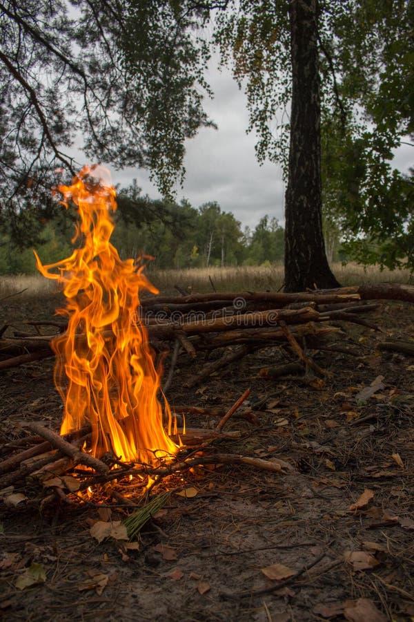 Φωτιά στο δάσος Campfire με φωτεινή φλόγα και ξύλινους κορμούς Φόντο πυρκαγιάς στοκ φωτογραφία