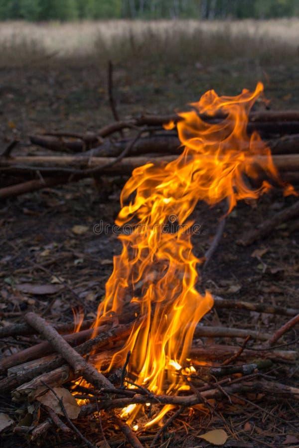Φωτιά στο δάσος Campfire με φωτεινή φλόγα και ξύλινους κορμούς Φόντο πυρκαγιάς στοκ φωτογραφίες με δικαίωμα ελεύθερης χρήσης