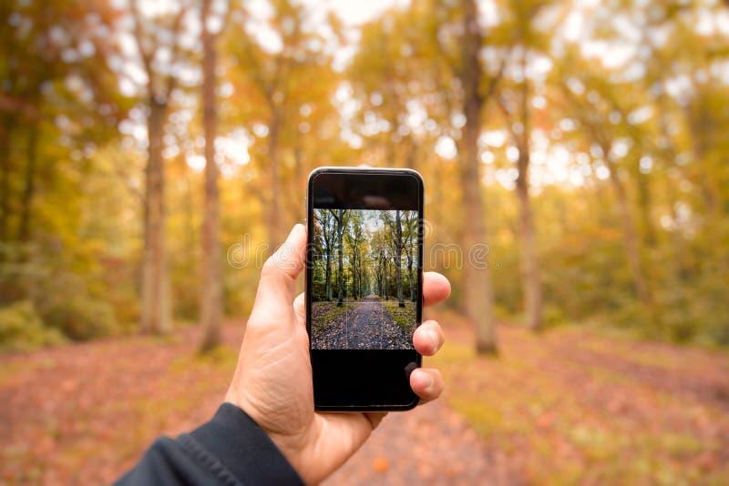 Φωτογράφιση των χρωμάτων φθινοπώρου στοκ φωτογραφία