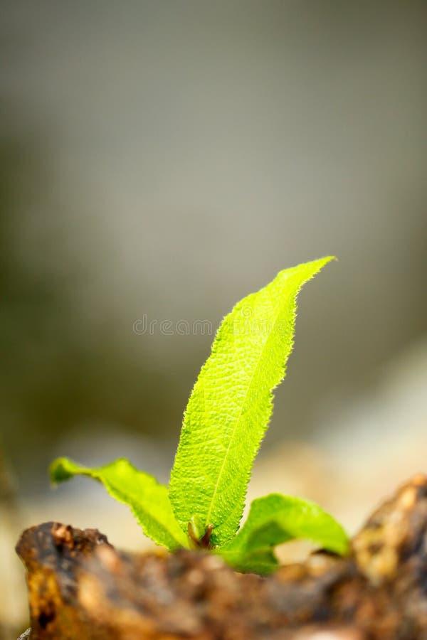 Φωτογραφία αποθεμάτων - πράσινη φτέρη στο φλοιό στοκ εικόνες