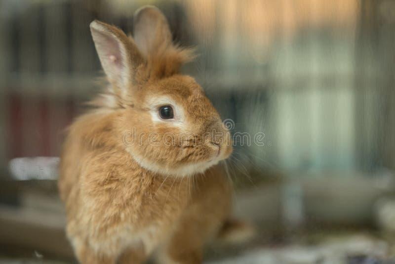 Φωτογραφία ενός κουνελιού λαγουδάκι πίσω από το γυαλί στοκ φωτογραφία