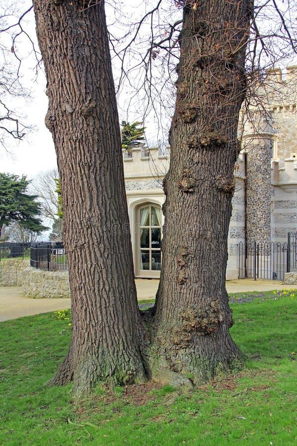 Άποψη του Castle μέσω του παλαιού δέντρου στοκ φωτογραφία
