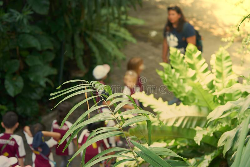 Φωτογραφία θαμπάδων του ταξιδιού τομέων παιδικών σταθμών με το δάσκαλο στην εκπαίδευση στοκ εικόνα με δικαίωμα ελεύθερης χρήσης