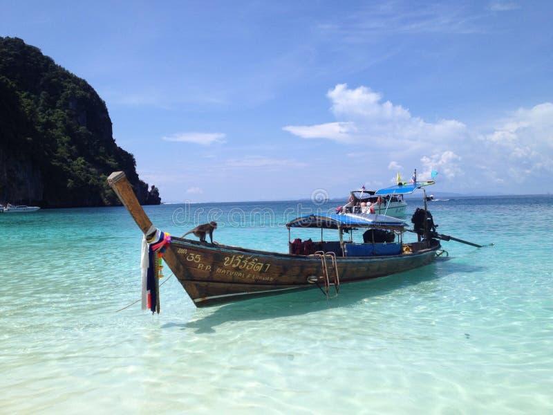 Φωτογραφία καρτών - παραλία πιθήκων στοκ φωτογραφία