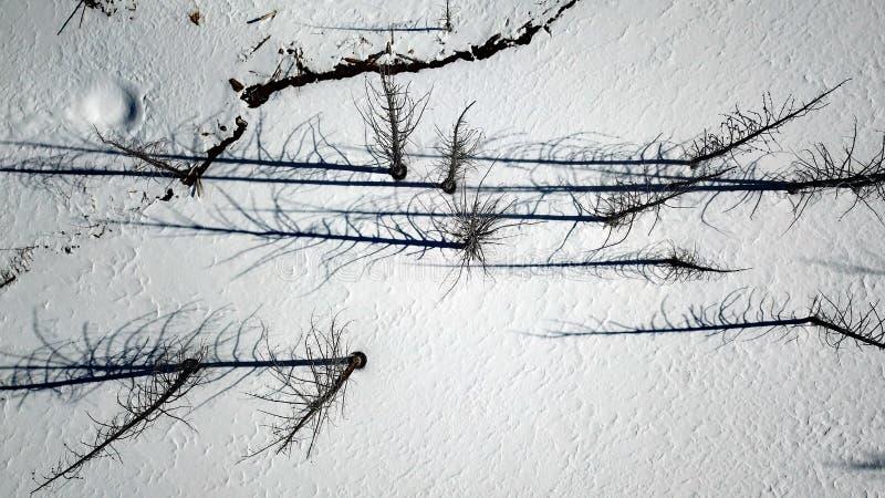 Φωτογραφία κηφήνων που κοιτάζει κάτω στα δέντρα και τις σκιές τους στοκ εικόνες
