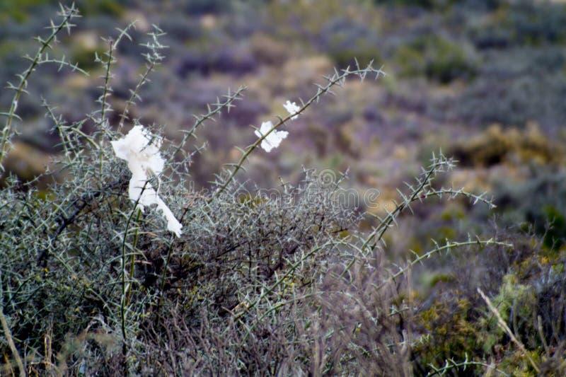 φωτογραφία μερικών πλαστικών τσαντών σε έναν Patagonian εγγενή θάμνο στοκ εικόνες