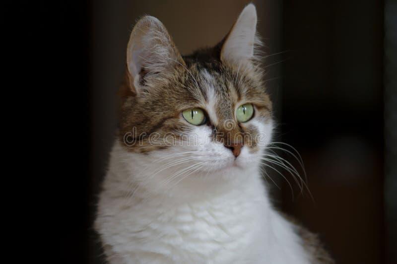 Φωτογραφία μιας όμορφης γάτας, φωτογραφία γατών στοκ φωτογραφία με δικαίωμα ελεύθερης χρήσης