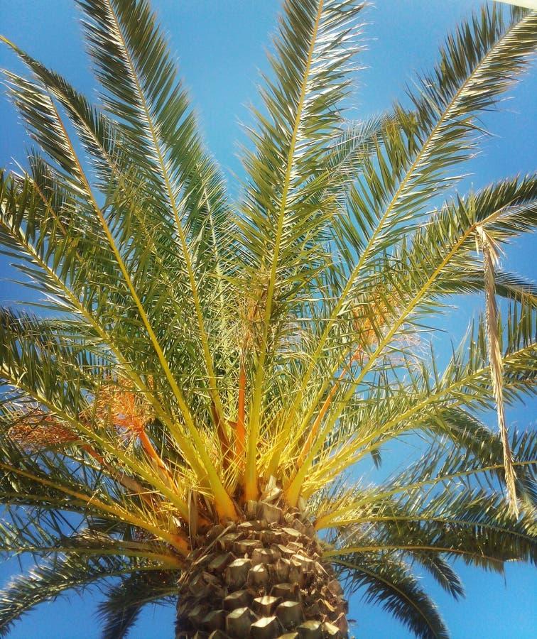 Φωτογραφία που λαμβάνεται στο μεσογειακό νησί Κορσική στοκ εικόνες