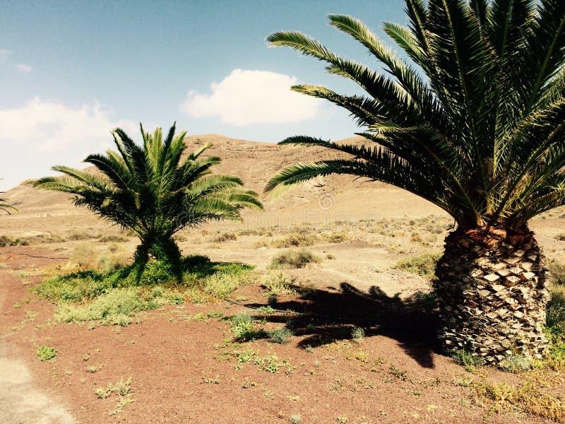 Φωτογραφία που λαμβάνεται στο μεσογειακό νησί Κορσική στοκ φωτογραφίες με δικαίωμα ελεύθερης χρήσης