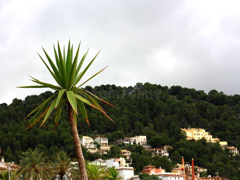 Φωτογραφία που λαμβάνεται στο μεσογειακό νησί Κορσική στοκ εικόνα με δικαίωμα ελεύθερης χρήσης