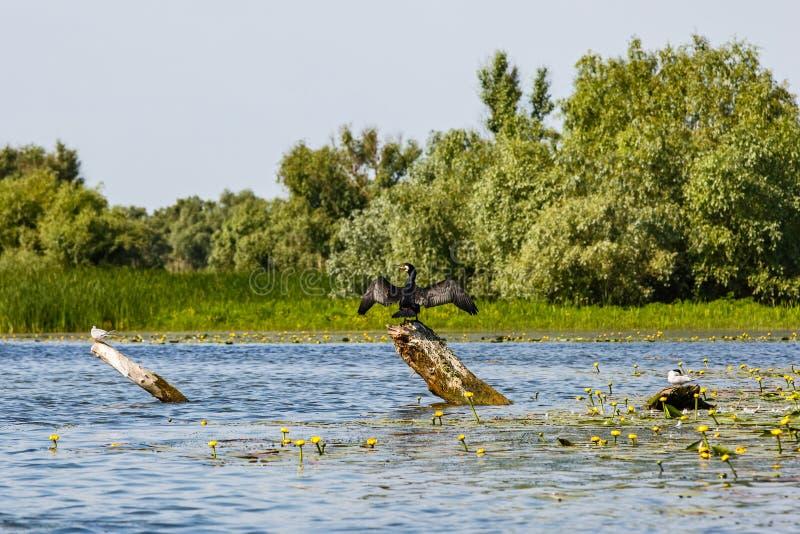 Φωτογραφία τοπίων της του δέλτα άγριας φύσης Δούναβη στοκ εικόνες με δικαίωμα ελεύθερης χρήσης