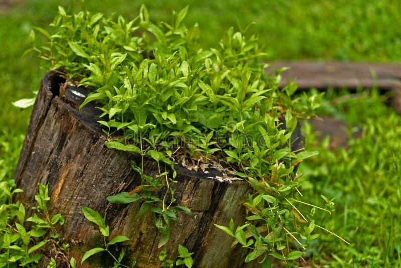Φωτογραφία του κολοβώματος στο κρύο θερινό δάσος στοκ εικόνες