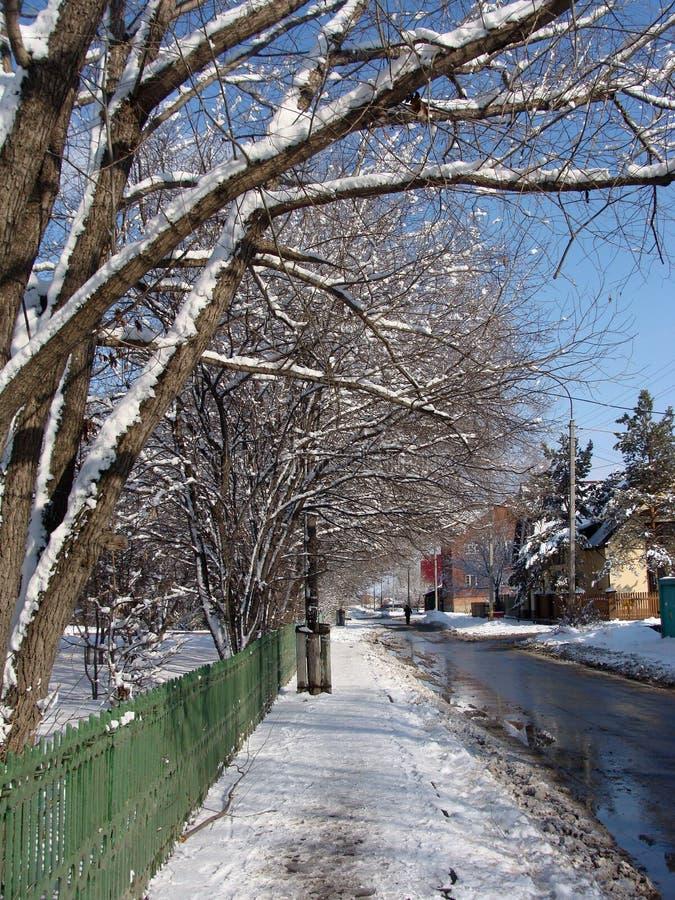 Φωτογραφία των δέντρων στο χιόνι στοκ εικόνα με δικαίωμα ελεύθερης χρήσης
